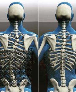 Anatominės sėdėjimo sistemos